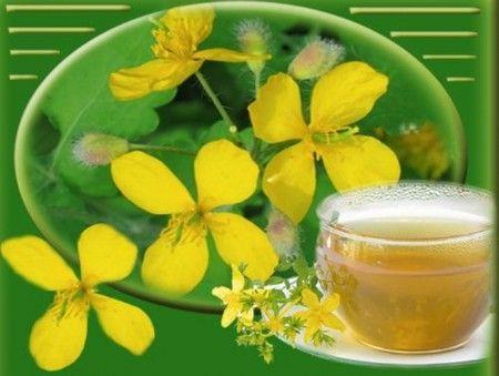 Чистотіл: лікувальні властивості отруйної трави