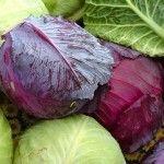 Що ми знаємо про капусту?