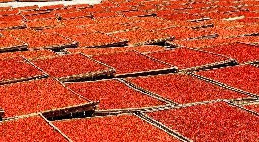 Де купити ягоди годжі в москві?