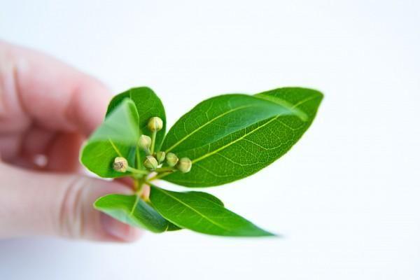 Як використовують лушпиння цибулі і лавровий лист в народній медицині?