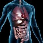 Як прискорити метаболізм?