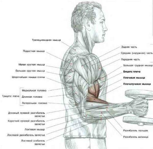 Комплекс домашніх вправ для схуднення чоловіків