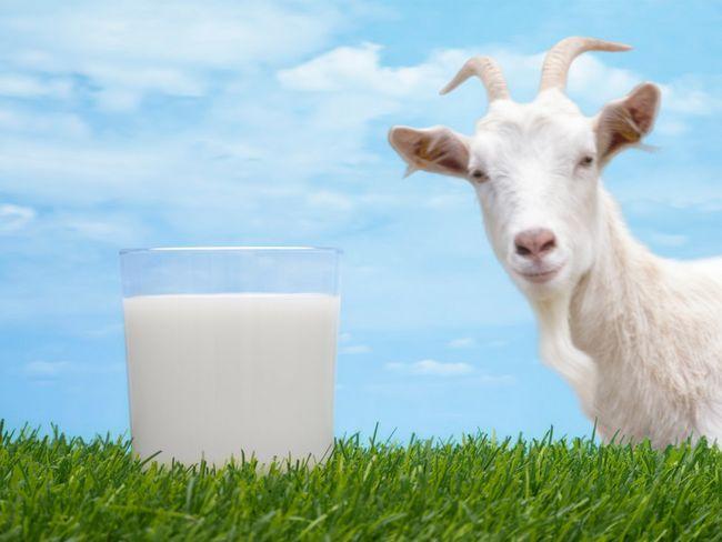 козяче молоко 2