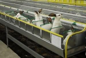 Кролик корисні властивості