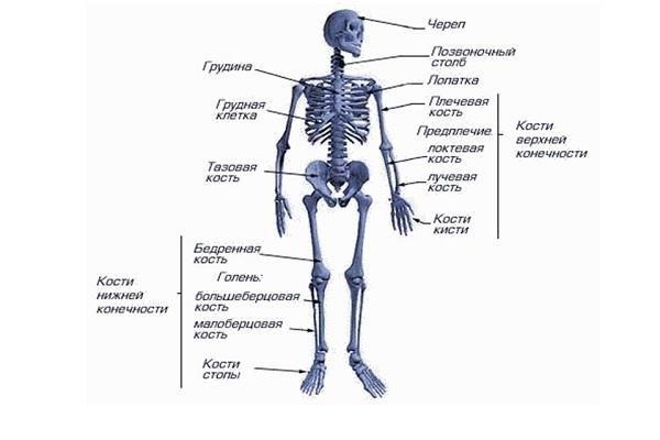 Лікування кісток за допомогою глини