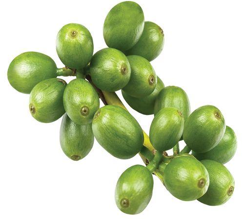 Зелений кави: користь і шкода для організму