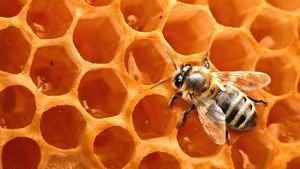 При якій температурі мед втрачає корисні властивості