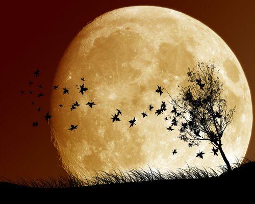 Дивимося на місяць і худнемо. Популярна місячна дієта 2017 року