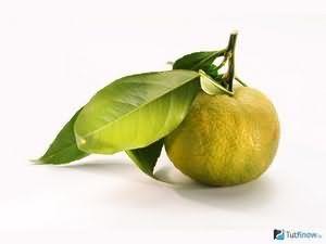 Світі фрукт корисні властивості і шкода
