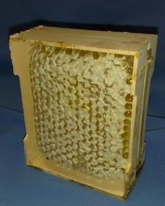 Тайговий мед корисні властивості