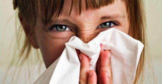 Топ-7 алергенів в нашому будинку і способи боротьби з ними