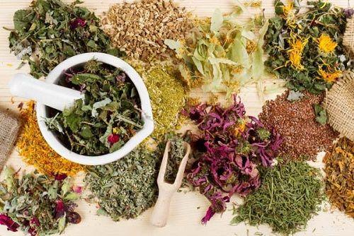 Трави для схуднення. Яка трава сприяє схудненню