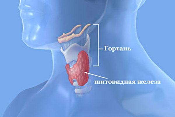 Захворювання щитовидної залози - лікування і профілактика
